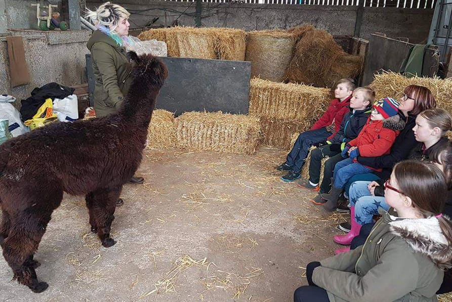 kids learning about alpacas